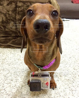 犬 - No.349397