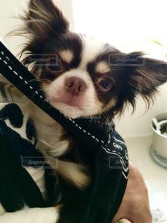 犬の写真・画像素材[349398]
