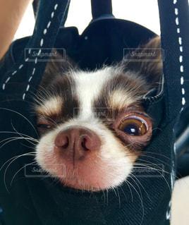 犬の写真・画像素材[349399]