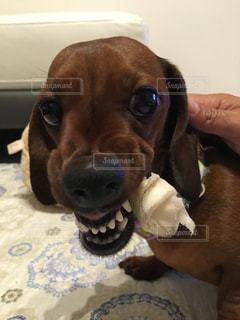 犬の写真・画像素材[349400]