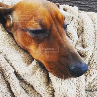 犬の写真・画像素材[349432]