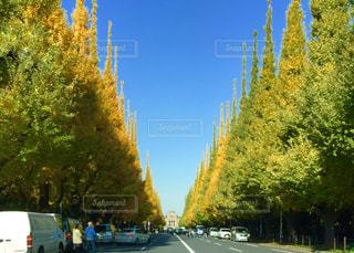 秋の写真・画像素材[351476]