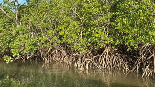 水域の隣の木の写真・画像素材[2830153]