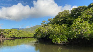 木に囲まれた水域の写真・画像素材[2830150]