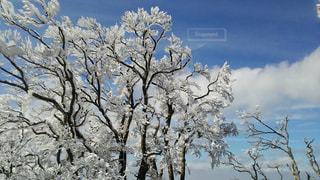 冬の写真・画像素材[404113]