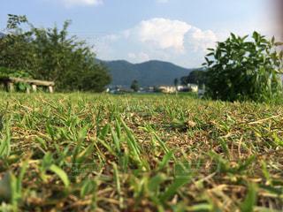 芝生の写真・画像素材[349558]