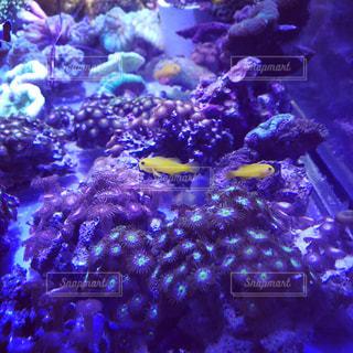 サンゴの水中ビューの写真・画像素材[928886]