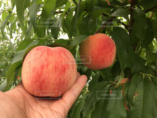 果物の写真・画像素材[593248]