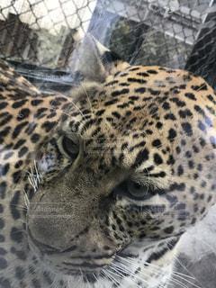 野生動物の写真・画像素材[349869]