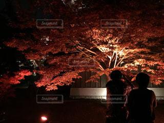 庭の写真・画像素材[355112]
