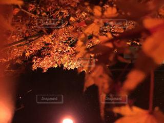 庭の写真・画像素材[355116]