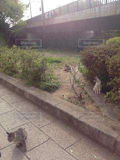 猫の写真・画像素材[349919]