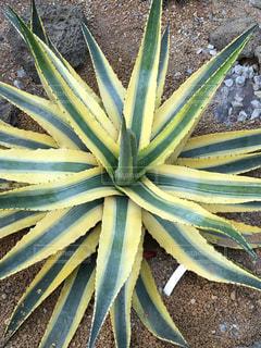 植物の写真・画像素材[350197]