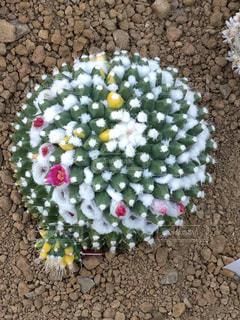 花の写真・画像素材[350198]