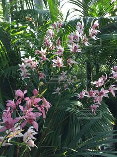 花の写真・画像素材[351324]