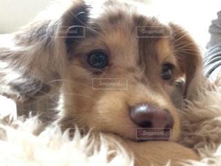 犬の写真・画像素材[351380]