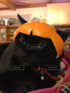 猫の写真・画像素材[350828]