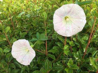 花の写真・画像素材[505918]