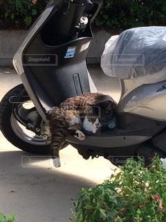 猫の写真・画像素材[350636]