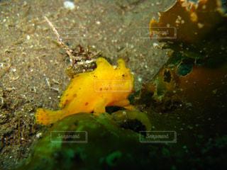 海の写真・画像素材[351780]