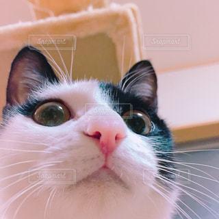 No.350546 猫