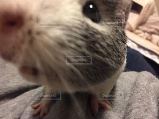 動物の写真・画像素材[367986]