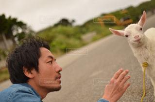 動物の写真・画像素材[357927]