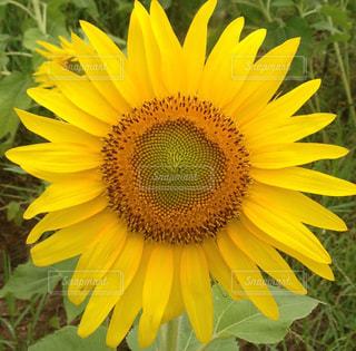 花の写真・画像素材[361819]