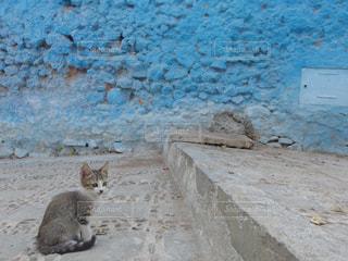 猫の写真・画像素材[361847]