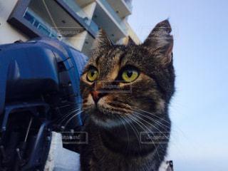 猫の写真・画像素材[350530]