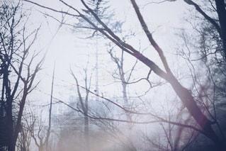 自然の写真・画像素材[9725]