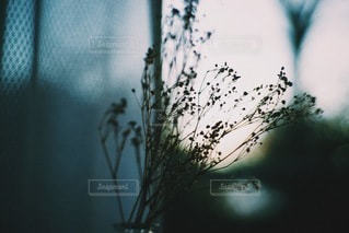 自然の写真・画像素材[9713]