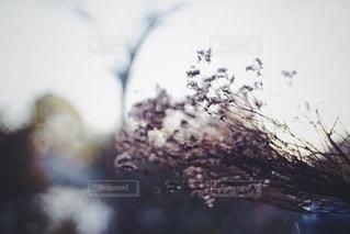 自然の写真・画像素材[9708]