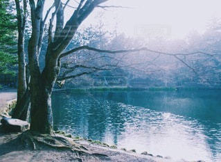 自然の写真・画像素材[9609]