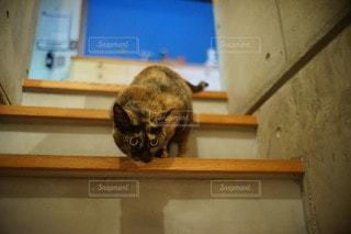 猫の写真・画像素材[9509]