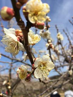 春の写真・画像素材[376546]