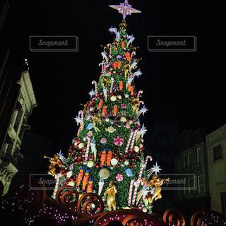 夜ライトアップされたクリスマス ツリーの写真・画像素材[889089]