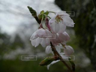 春 - No.351359
