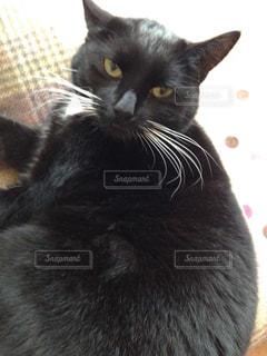 猫の写真・画像素材[351187]