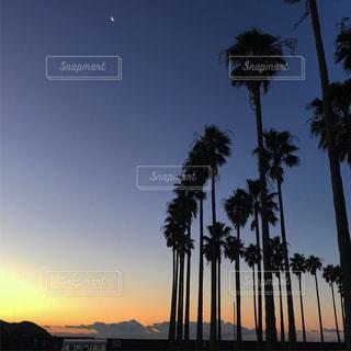 日没の前にヤシの木の写真・画像素材[926621]