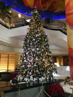 クリスマスツリーの写真・画像素材[351845]