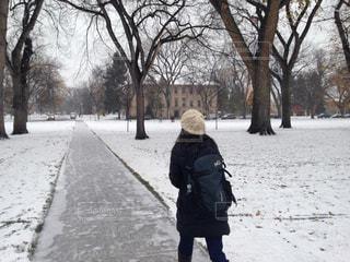 雪の写真・画像素材[351570]