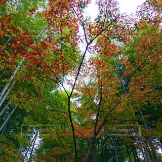 秋の写真・画像素材[352142]