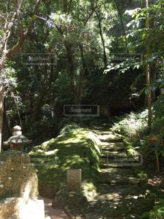 森林 - No.362041