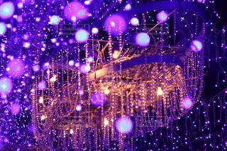 紫の写真・画像素材[352282]