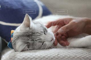 猫の写真・画像素材[356563]