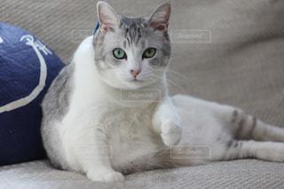 猫の写真・画像素材[356564]