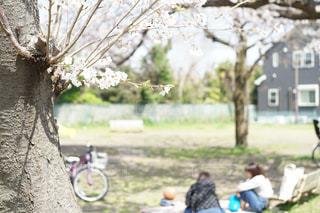 お花見の写真・画像素材[1093311]