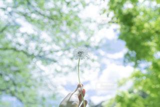 春の光の写真・画像素材[2126057]
