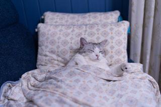 ベッドに座っている猫の写真・画像素材[2356185]